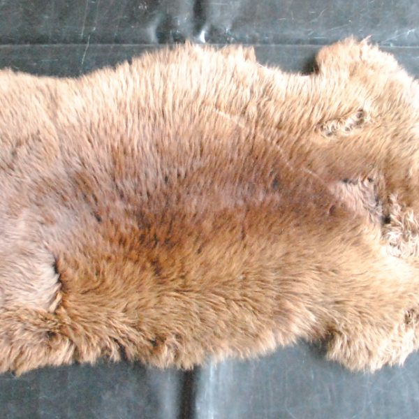 bruin schaap